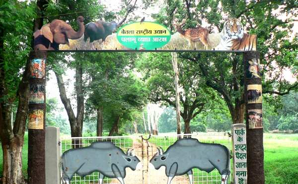 Betla National Park Jharkhand