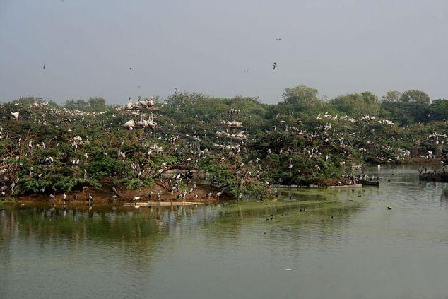 Uppalapadu Bird Sanctuary Guntur