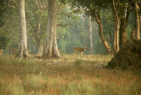 Mahavir Harina Vanasthali National
