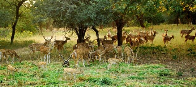 Deer Park at Mahavir Harina Vanasthali National Park