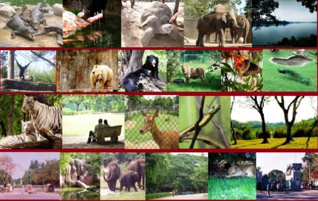 Nehru Zoological Park Hyderabad