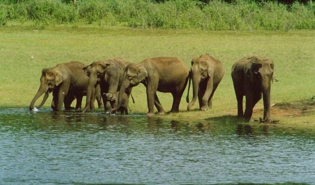 view-of-periyar-wildlife-sanctuary-thekkady